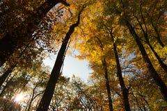 Forêt automnale Photo libre de droits