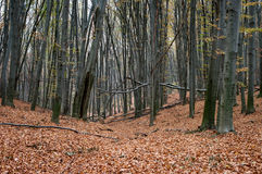 Forêt automnale Photo stock