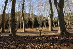 Forêt automnale photos libres de droits