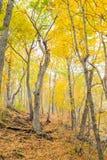 Forêt automnale Photographie stock libre de droits