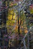 Forêt automnale Photos stock