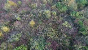 Forêt automnale colorée clips vidéos