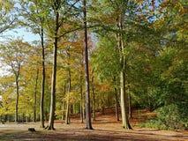 Forêt automnale de hêtre dans le contre-jour Photo stock