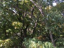 Forêt, automne tôt Arbres Photo libre de droits
