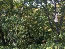 Forêt, automne tôt Arbres Images stock
