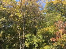 Forêt, automne tôt Arbres Photographie stock