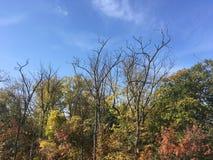Forêt, automne tôt Arbres, ciel bleu Photos stock