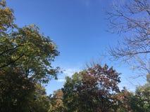 Forêt, automne tôt Vers le haut de la vue sur des arbres Image stock