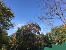 Forêt, automne tôt Vers le haut de la vue sur des arbres Images stock