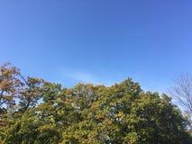 Forêt, automne tôt Vers le haut de la vue sur des arbres Image libre de droits