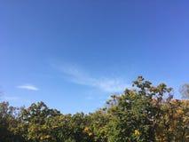 Forêt, automne tôt Vers le haut de la vue sur des arbres Photos libres de droits