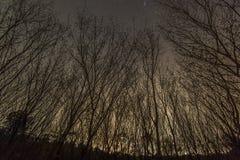 Forêt autour de la ville Photo stock