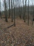 Forêt avant une tempête Photo stock