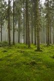 Forêt avec de la mousse photo libre de droits
