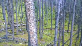 Forêt avec de la mousse Photographie stock libre de droits