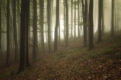 Forêt avec des arbres de cuvette de brouillard et de lumière Image stock