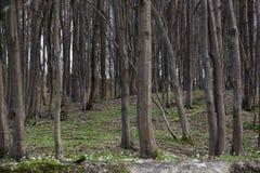Forêt avec des fleurs Photos stock