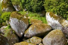 Forêt avec des roches Photos stock