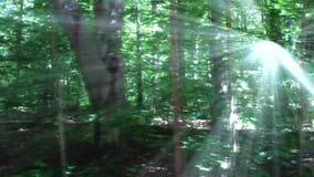 Forêt avec la lumière du soleil rayonnante clips vidéos