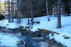 forêt avec la neige photographie stock libre de droits