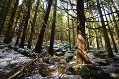 Forêt avec la pente de neige Photos stock