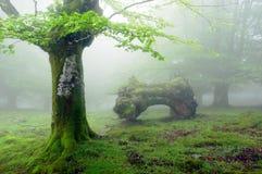 Forêt avec le brouillard au printemps et le tronc mort Images stock