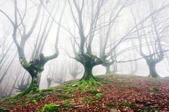 Forêt avec le brouillard avec les arbres tordus Photo stock