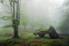 Forêt avec le brouillard et le tronc mort Image libre de droits