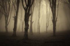 Forêt avec le brouillard foncé Photographie stock libre de droits