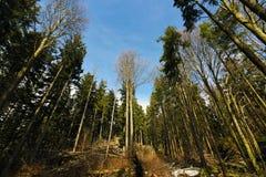 Forêt avec le ciel bleu Photos libres de droits
