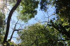 Forêt avec le ciel bleu Images stock