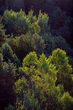 Forêt avec le contre-jour jaune mou images stock