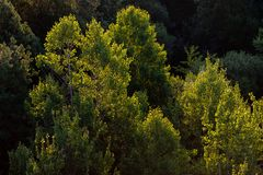 Forêt avec le contre-jour jaune mou photo libre de droits