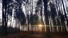Forêt avec le coucher de soleil photos libres de droits
