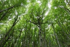 Forêt avec le feuillage vert très intense photographie stock