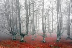 Forêt avec les arbres effrayants image libre de droits