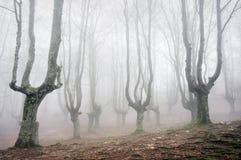 Forêt avec les arbres effrayants images stock