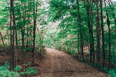 Forêt avec les arbres et la saleté verts images libres de droits