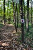 Forêt avec les arbres et le coeur rouge peints sur l'arbre photo stock
