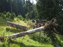 Forêt avec les arbres et les plantes vertes tombés Photo libre de droits