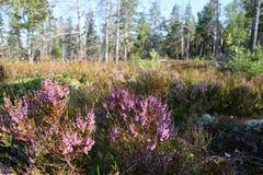 Forêt avec les fleurs pourpres photos stock