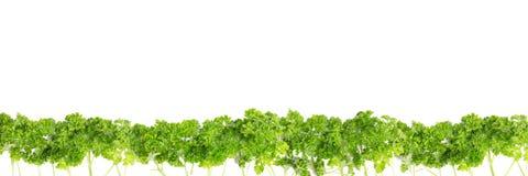 Forêt avec parsely Image libre de droits