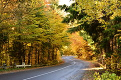 Forêt balkanique d'automne le long de la route Photographie stock
