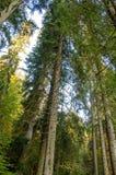 Forêt bavaroise Image libre de droits