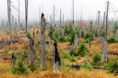 Forêt bavaroise Photographie stock libre de droits