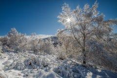 Forêt blanche Image libre de droits