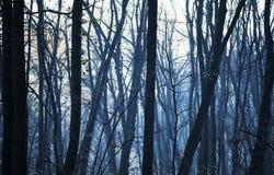 Forêt bleue Image stock