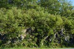 Forêt bleue de roche de Ridge Mountains en été Photos libres de droits