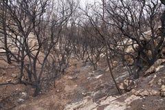 Forêt brûlée Photos stock