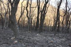 Forêt brûlée Image stock